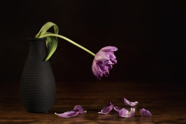 cremation services in Lakewood WA